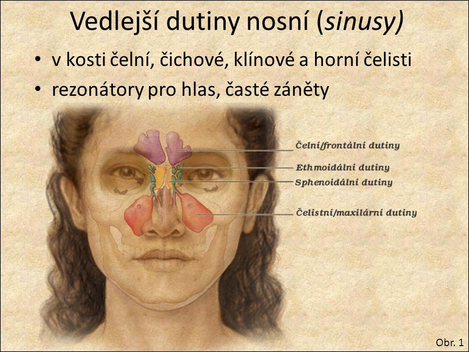 Vedlejší dutiny nosní (sinusy) v kosti čelní, čichové, klínové a horní čelisti rezonátory pro hlas, časté záněty Obr. 1