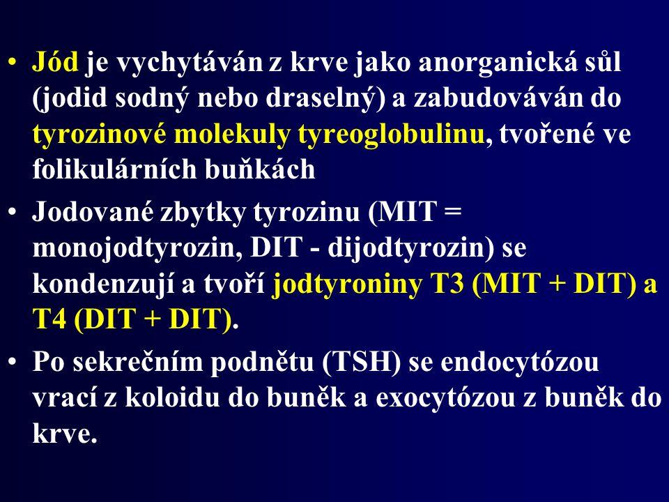 Jód je vychytáván z krve jako anorganická sůl (jodid sodný nebo draselný) a zabudováván do tyrozinové molekuly tyreoglobulinu, tvořené ve folikulárních buňkách Jodované zbytky tyrozinu (MIT = monojodtyrozin, DIT - dijodtyrozin) se kondenzují a tvoří jodtyroniny T3 (MIT + DIT) a T4 (DIT + DIT).