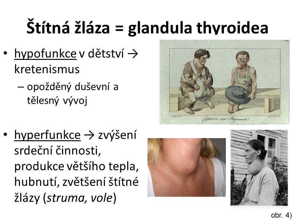 Štítná žláza = glandula thyroidea hypofunkce v dětství → kretenismus – opožděný duševní a tělesný vývoj hyperfunkce → zvýšení srdeční činnosti, produk