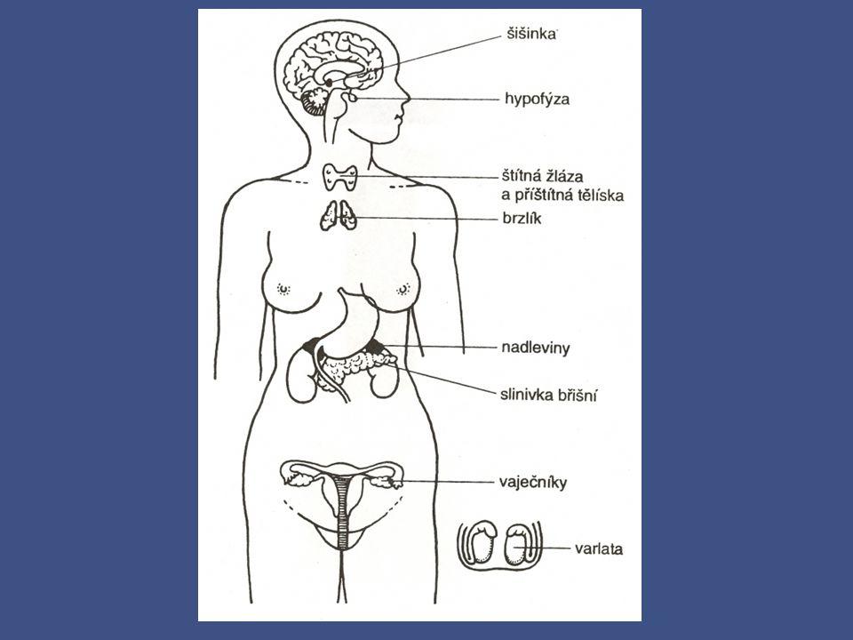 Hormonální soustava PODVĚSEK MOZKOVÝ – (HYPOFÝZA) – uložena v tureckém sedle kosti klínové, ovlivňuje činnost ostatních endokrinních žláz, růstový hormon ŠIŠINKA – denní biorytmy – bdění, spánek ŠTÍTNÁ ŽLÁZA – termoregulace - metabolismus bílkovin - tyroxin - po stranách štítné chrupavky