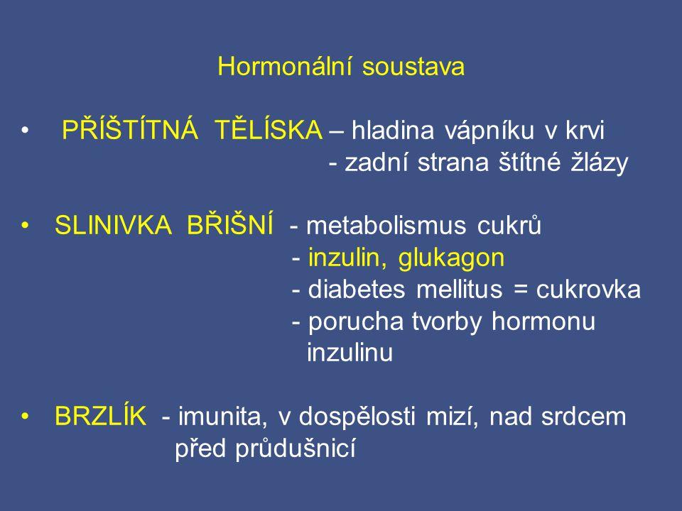 Hormonální soustava PŘÍŠTÍTNÁ TĚLÍSKA – hladina vápníku v krvi - zadní strana štítné žlázy SLINIVKA BŘIŠNÍ - metabolismus cukrů - inzulin, glukagon -