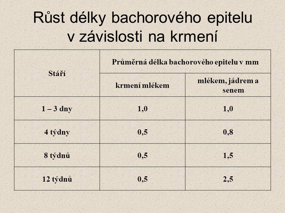 Růst délky bachorového epitelu v závislosti na krmení Stáří Průměrná délka bachorového epitelu v mm krmení mlékem mlékem, jádrem a senem 1 – 3 dny1,0