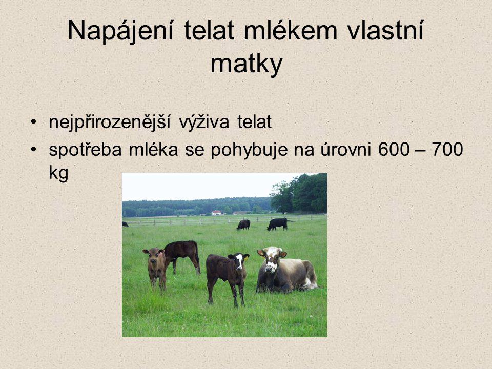 Napájení telat mlékem vlastní matky nejpřirozenější výživa telat spotřeba mléka se pohybuje na úrovni 600 – 700 kg