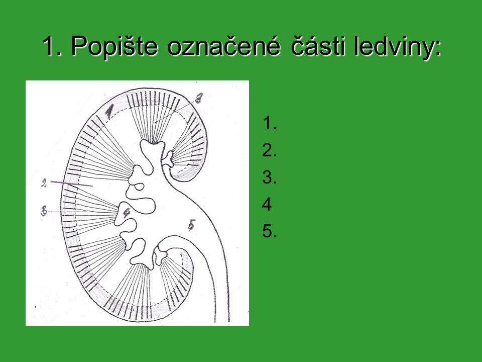 1.Popište označené části ledviny: 1. Kůra 2. Dřeň 3.