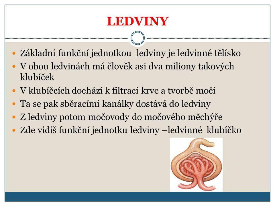 LEDVINY Základní funkční jednotkou ledviny je ledvinné tělísko V obou ledvinách má člověk asi dva miliony takových klubíček V klubíčcích dochází k fil