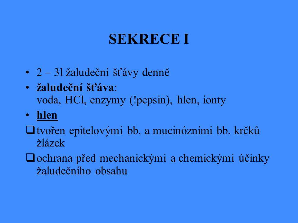 SEKRECE I 2 – 3l žaludeční šťávy denně žaludeční šťáva: voda, HCl, enzymy (!pepsin), hlen, ionty hlen  tvořen epitelovými bb. a mucinózními bb. krčků
