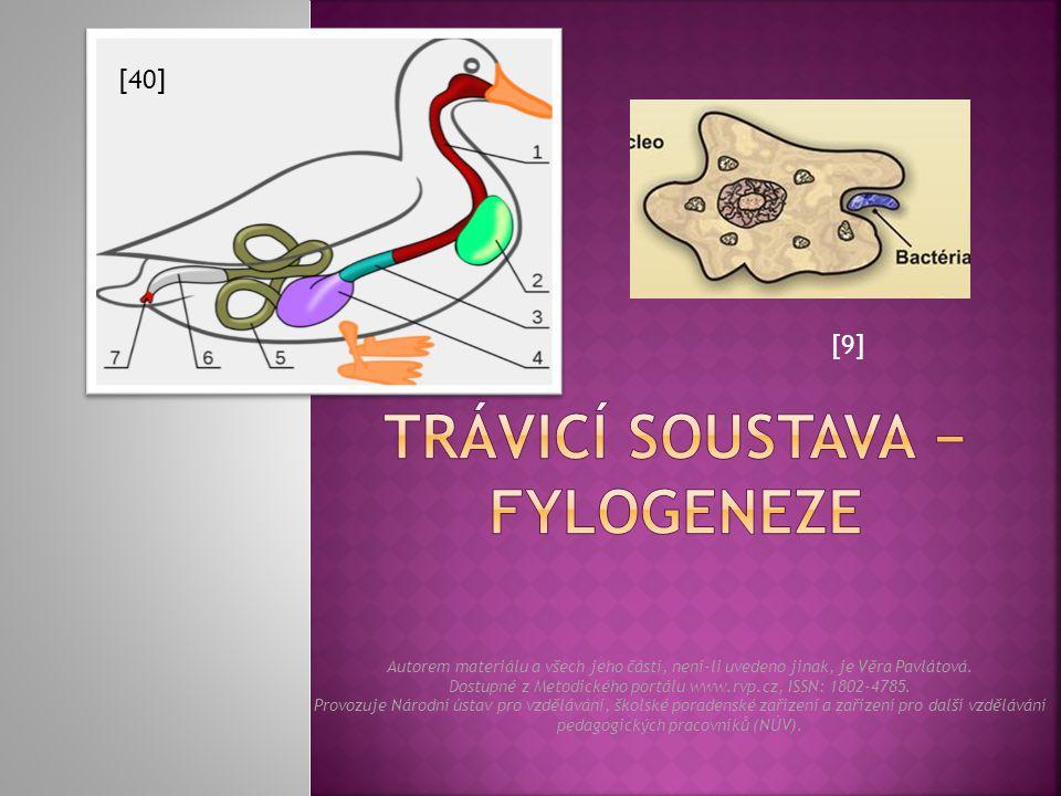  Jedná se o druh endocytózy, kdy dochází k pohlcování větších částic.