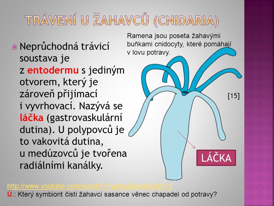 Askon je nejjednodušší typ. Kanálky, kterými nasává vodu, jsou v podstatě rovné a choanocyty se vyskytují jen ve spongocoelu (trávicí dutině). U Sykon