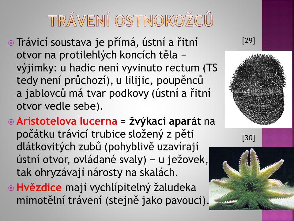 (prvoústí × druhoústí) prvoústí: ústní otvor představuje embryonální blastoporus druhoústí: blastoporus se uzavírá a v blízkosti jeho původní pozice s