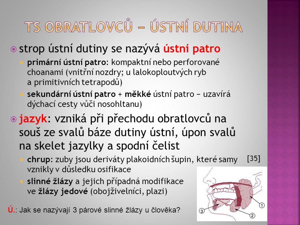 Ú.: Popište části a funkci TS člověka. [34] http://www.youtube.com/wat ch?v=Z7xKYNz9AS0 http://www.youtube.com/wat ch?v=Z7xKYNz9AS0