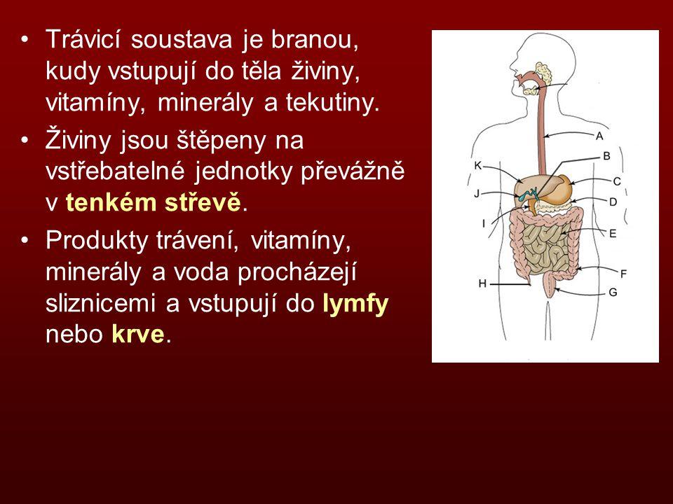 Žlučník Žlučník je drobný vakovitý útvar hruškovitého tvaru, umístěný pod pravým jaterním lalokem.