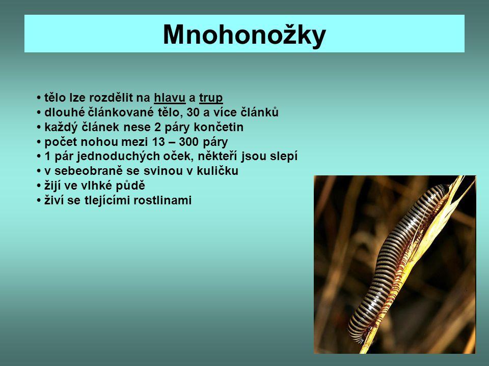 Mnohonožky tělo lze rozdělit na hlavu a trup dlouhé článkované tělo, 30 a více článků každý článek nese 2 páry končetin počet nohou mezi 13 – 300 páry