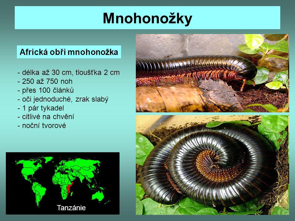 Mnohonožky Africká obři mnohonožka - délka až 30 cm, tloušťka 2 cm - 250 až 750 noh - přes 100 článků - oči jednoduché, zrak slabý - 1 pár tykadel - c