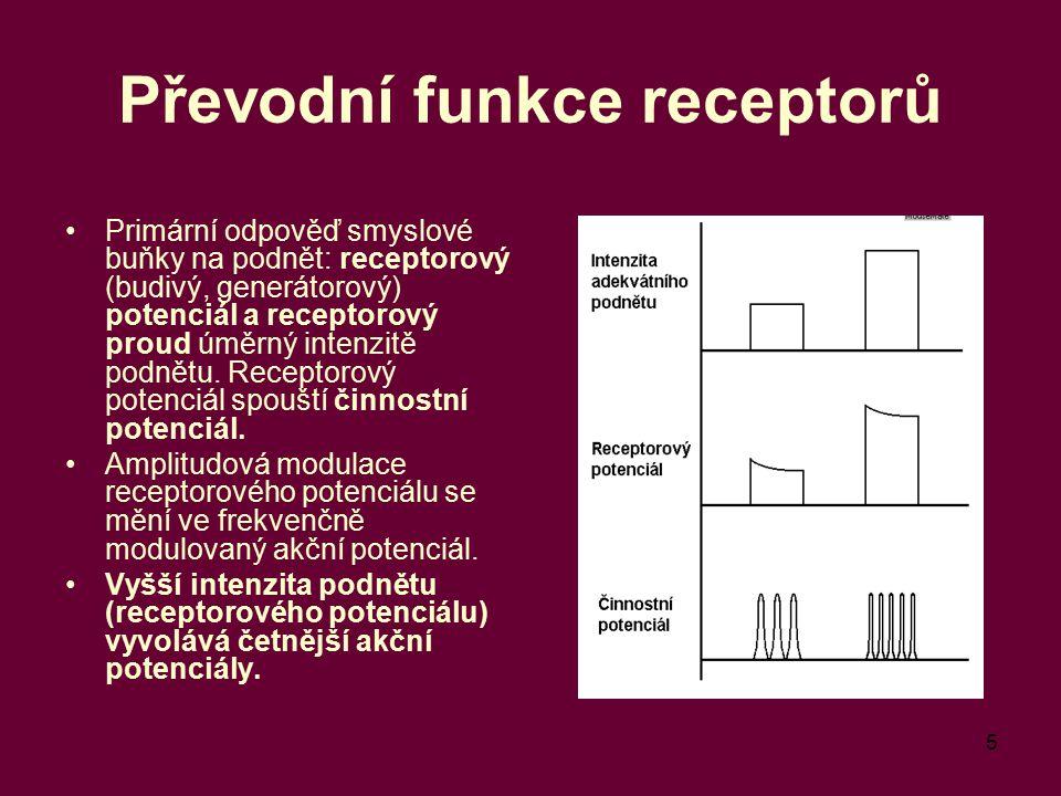 5 Převodní funkce receptorů Primární odpověď smyslové buňky na podnět: receptorový (budivý, generátorový) potenciál a receptorový proud úměrný intenzi