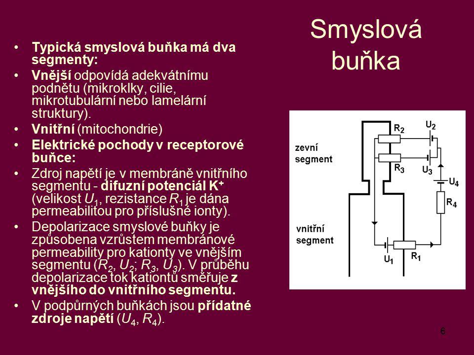 6 Smyslová buňka Typická smyslová buňka má dva segmenty: Vnější odpovídá adekvátnímu podnětu (mikroklky, cilie, mikrotubulární nebo lamelární struktur