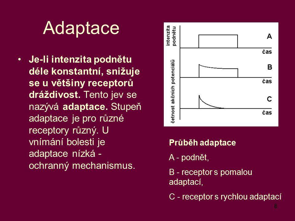 8 Adaptace Je-li intenzita podnětu déle konstantní, snižuje se u většiny receptorů dráždivost. Tento jev se nazývá adaptace. Stupeň adaptace je pro rů