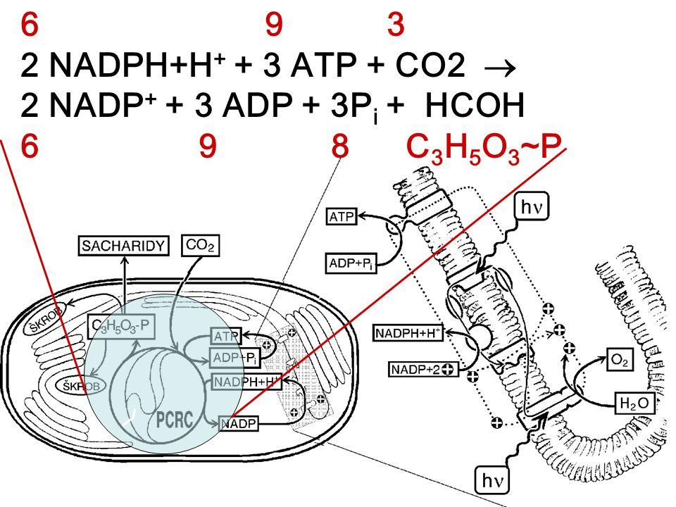 6 9 3 2 NADPH+H + + 3 ATP + CO2  2 NADP + + 3 ADP + 3P i + HCOH 6 9 8 C 3 H 5 O 3 ~P