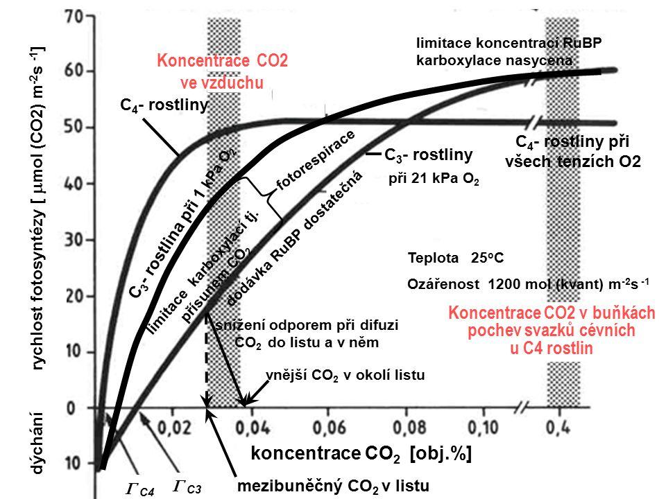 dýchání rychlost fotosyntézy [  mol (CO2) m -2 s -1 ] mezibuněčný CO 2 v listu vnější CO 2 v okolí listu Teplota 25 o C Ozářenost 1200 mol (kvant) m