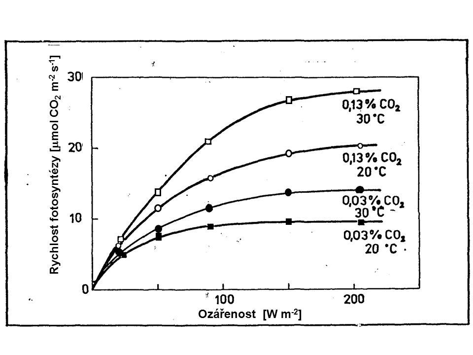10 40120200 400 80 10 20 30 40 Ozářenost [  mol(kvant)m -2 s -1 ] Rychlost fotosyntézy [  mol(O 2 )mmol -1 (Chl)s -1 ] Teplota [°C] obj.
