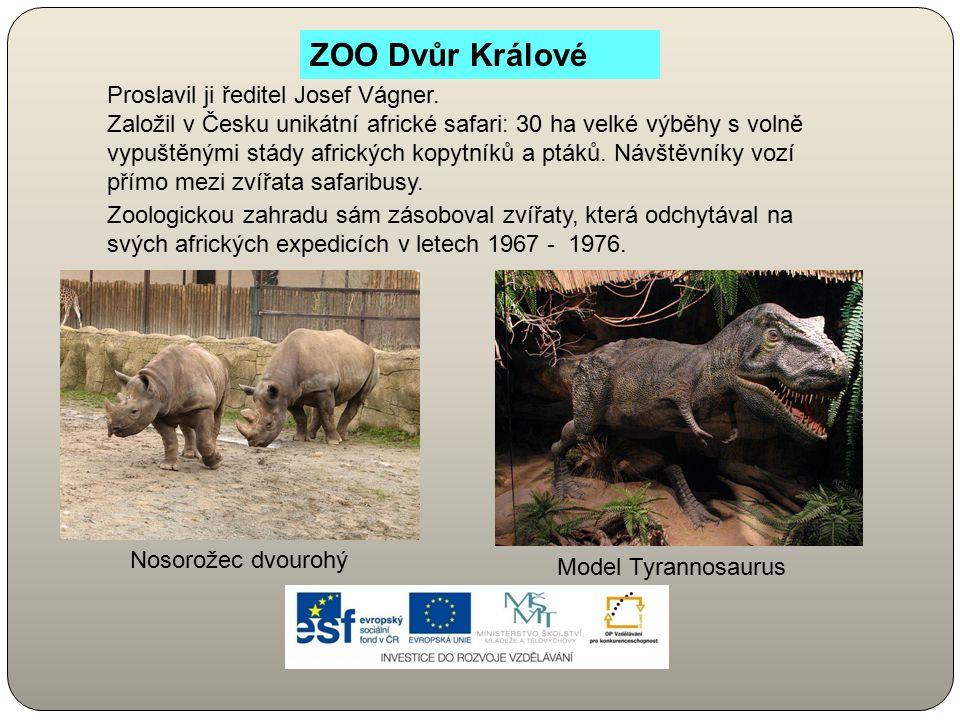 ZOO Dvůr Králové Proslavil ji ředitel Josef Vágner. Založil v Česku unikátní africké safari: 30 ha velké výběhy s volně vypuštěnými stády afrických ko