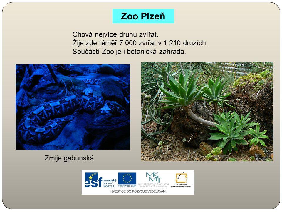 Zoo Plzeň Chová nejvíce druhů zvířat. Žije zde téměř 7 000 zvířat v 1 210 druzích. Součástí Zoo je i botanická zahrada. Zmije gabunská