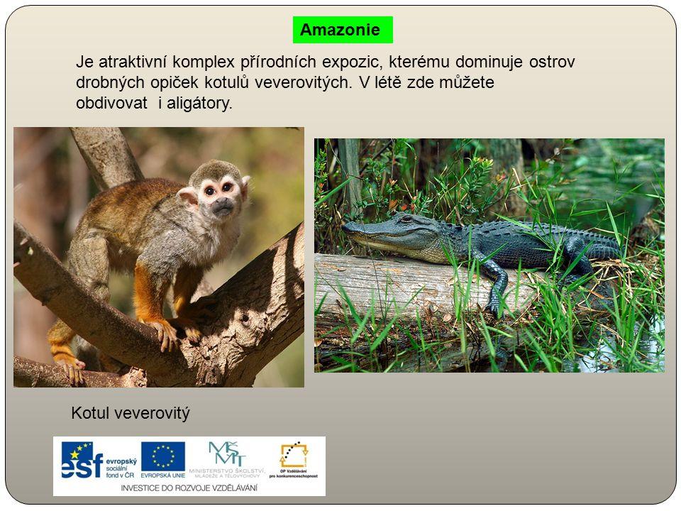 Je atraktivní komplex přírodních expozic, kterému dominuje ostrov drobných opiček kotulů veverovitých. V létě zde můžete obdivovat i aligátory. Kotul