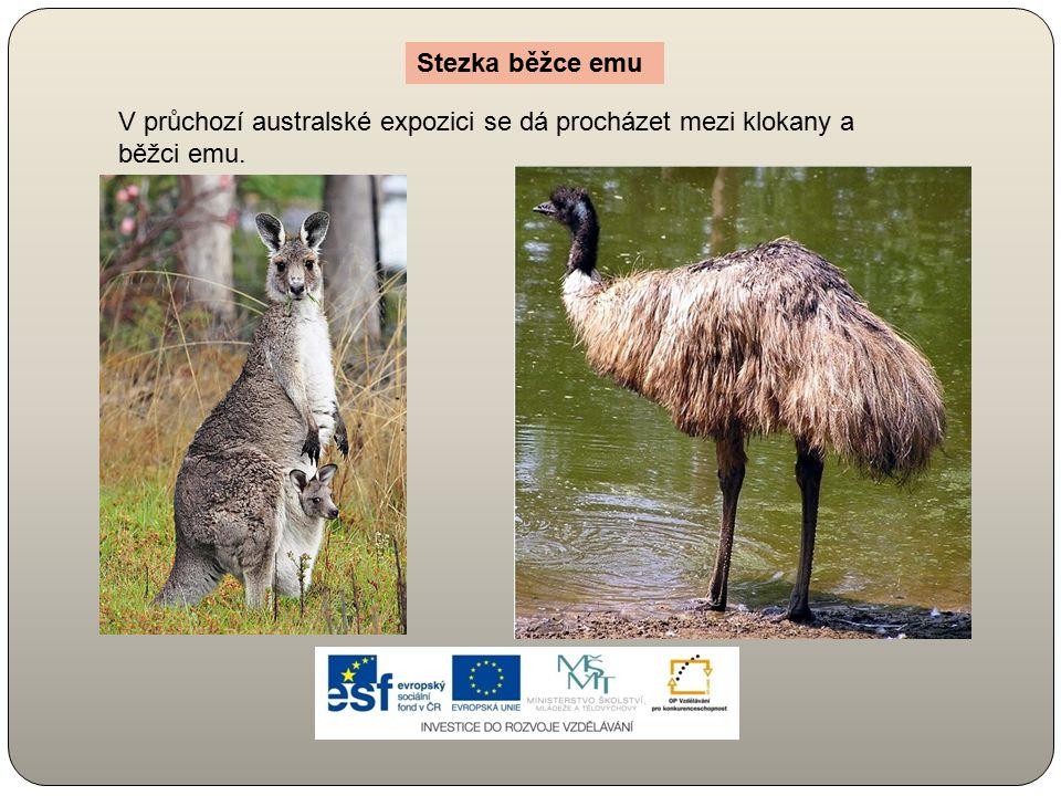 V průchozí australské expozici se dá procházet mezi klokany a běžci emu. Stezka běžce emu