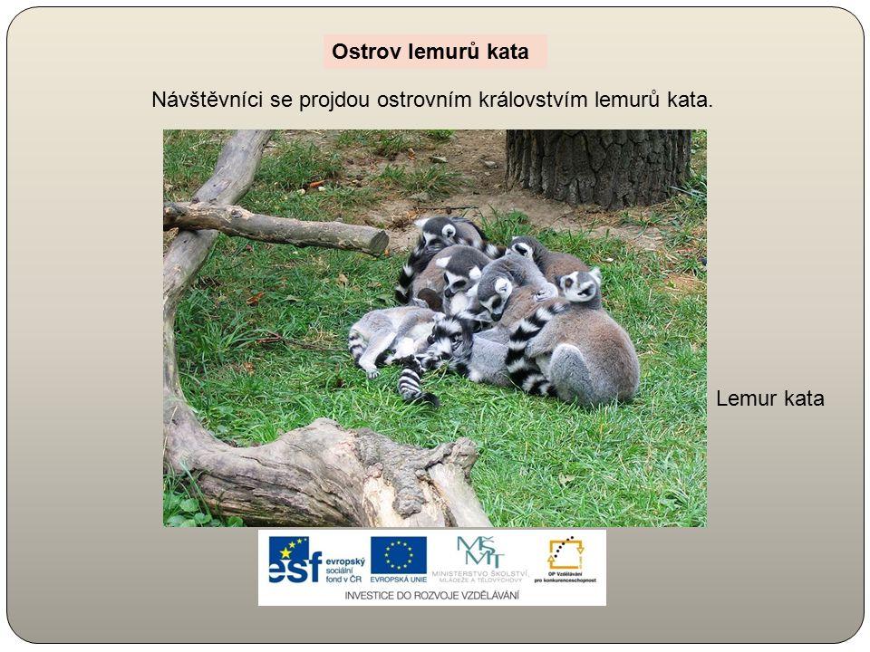 Lemur kata Návštěvníci se projdou ostrovním královstvím lemurů kata. Ostrov lemurů kata
