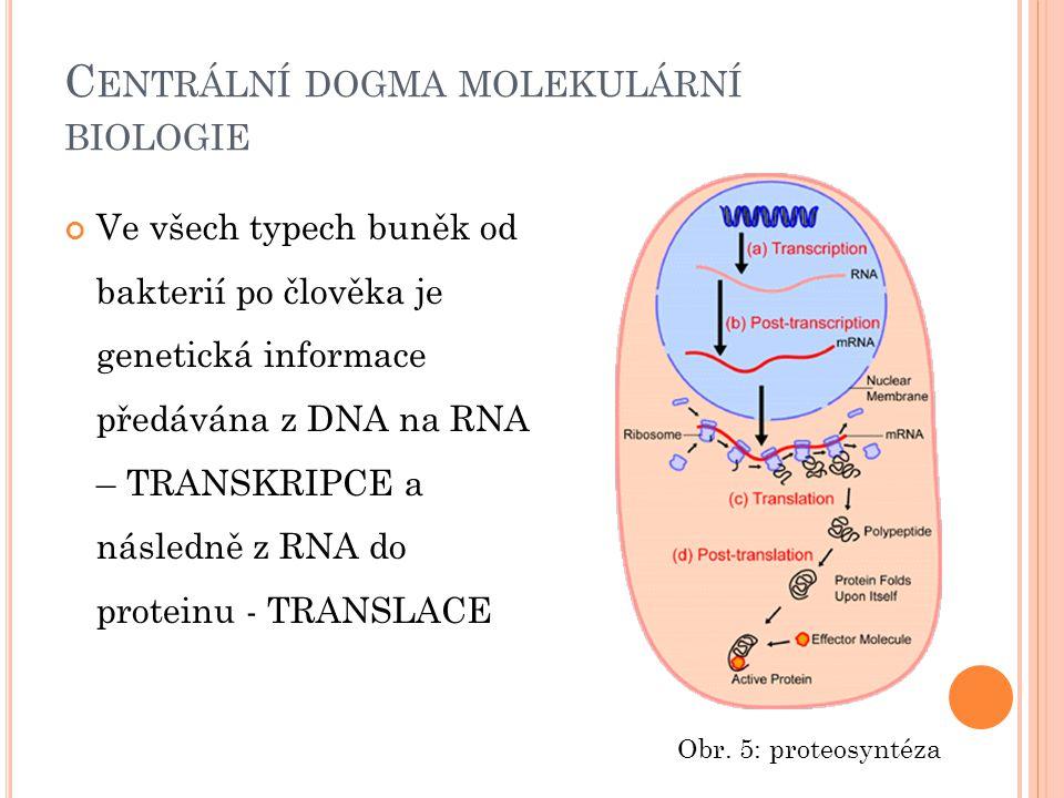 C ENTRÁLNÍ DOGMA MOLEKULÁRNÍ BIOLOGIE Ve všech typech buněk od bakterií po člověka je genetická informace předávána z DNA na RNA – TRANSKRIPCE a násle