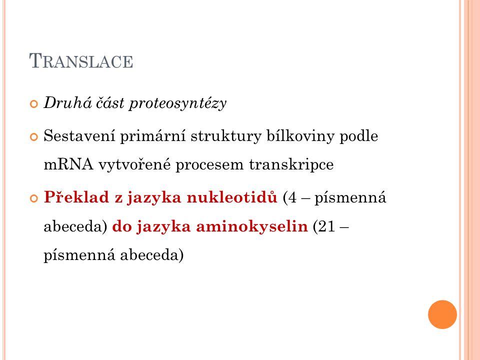 T RANSLACE Druhá část proteosyntézy Sestavení primární struktury bílkoviny podle mRNA vytvořené procesem transkripce Překlad z jazyka nukleotidů (4 –