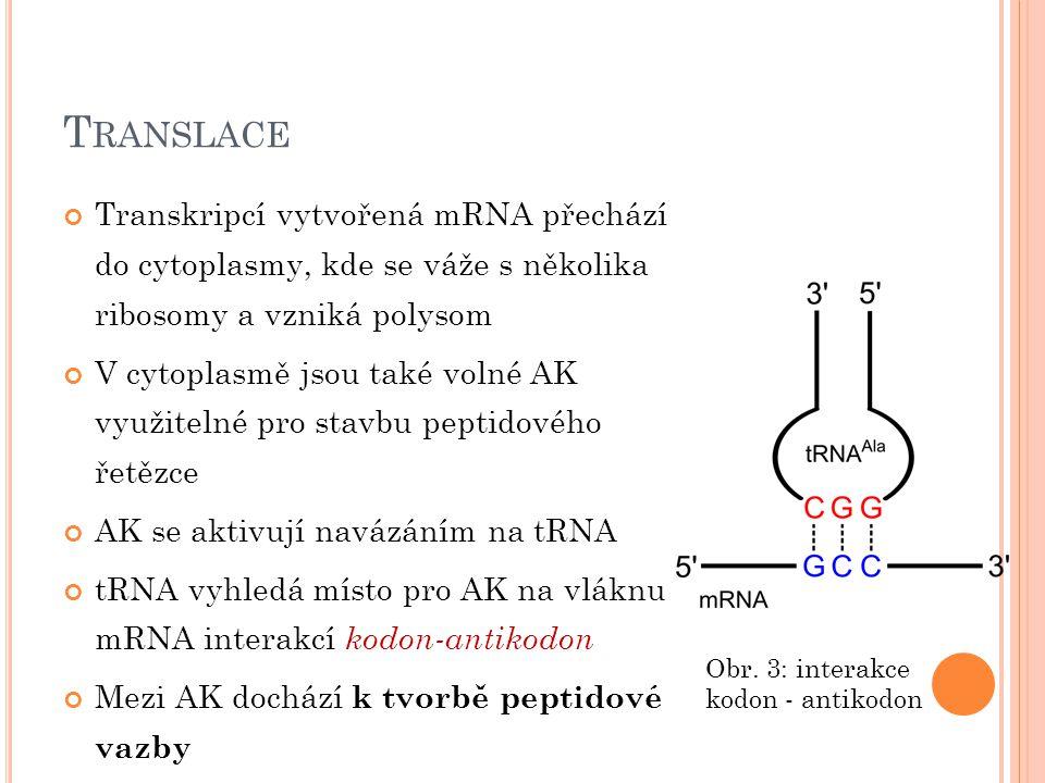 T RANSLACE Tříkrokový mechanismus 1.tRNA se naváže do místa A na ribosomu 2.Vzniká peptidová vazba 3.Malá podjednotka ribosomu se posune o 3 nukleotidy podél mRNA, uvolní se tRNA bez AK Obr.