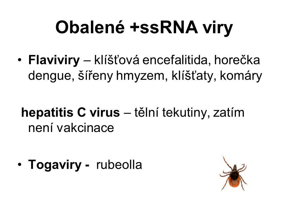 Obalené +ssRNA viry Flaviviry – klíšťová encefalitida, horečka dengue, šířeny hmyzem, klíšťaty, komáry hepatitis C virus – tělní tekutiny, zatím není vakcinace Togaviry - rubeolla