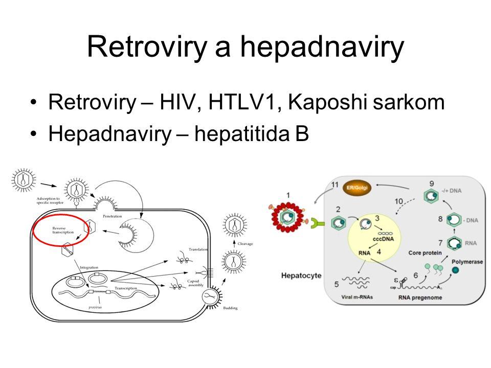 Retroviry a hepadnaviry Retroviry – HIV, HTLV1, Kaposhi sarkom Hepadnaviry – hepatitida B