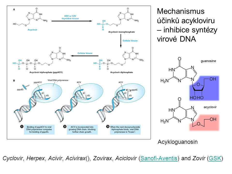 Mechanismus účinků acykloviru – inhibice syntézy virové DNA Cyclovir, Herpex, Acivir, Acivirax(), Zovirax, Aciclovir (Sanofi-Aventis) and Zovir (GSK)Sanofi-AventisGSK Acykloguanosin