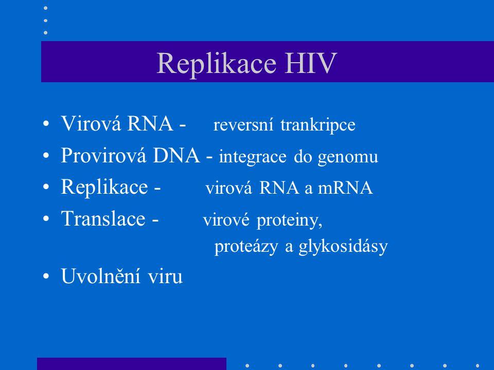 Replikace HIV Virová RNA - reversní trankripce Provirová DNA - integrace do genomu Replikace - virová RNA a mRNA Translace - virové proteiny, proteázy