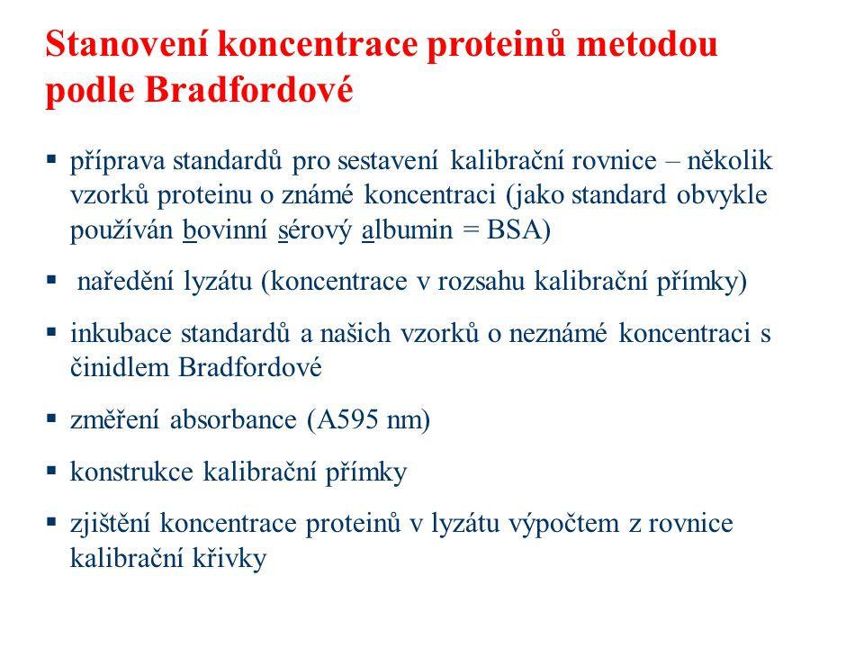  příprava standardů pro sestavení kalibrační rovnice – několik vzorků proteinu o známé koncentraci (jako standard obvykle používán bovinní sérový albumin = BSA)  naředění lyzátu (koncentrace v rozsahu kalibrační přímky)  inkubace standardů a našich vzorků o neznámé koncentraci s činidlem Bradfordové  změření absorbance (A595 nm)  konstrukce kalibrační přímky  zjištění koncentrace proteinů v lyzátu výpočtem z rovnice kalibrační křivky Stanovení koncentrace proteinů metodou podle Bradfordové