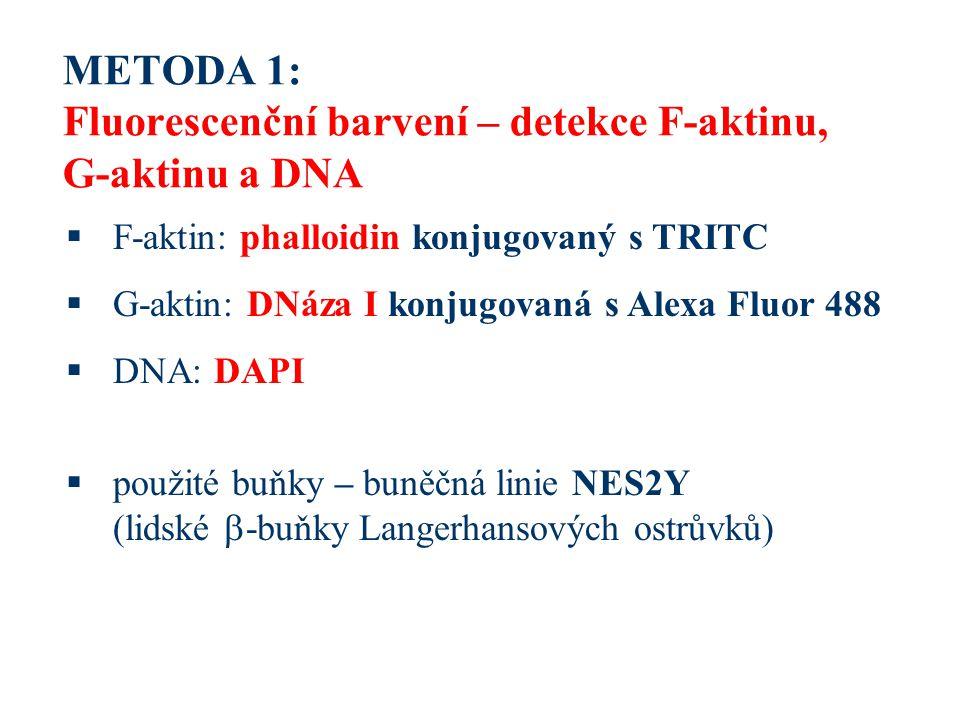 METODA 1: Fluorescenční barvení – detekce F-aktinu, G-aktinu a DNA  F-aktin: phalloidin konjugovaný s TRITC  G-aktin: DNáza I konjugovaná s Alexa Fluor 488  DNA: DAPI  použité buňky – buněčná linie NES2Y (lidské  -buňky Langerhansových ostrůvků)