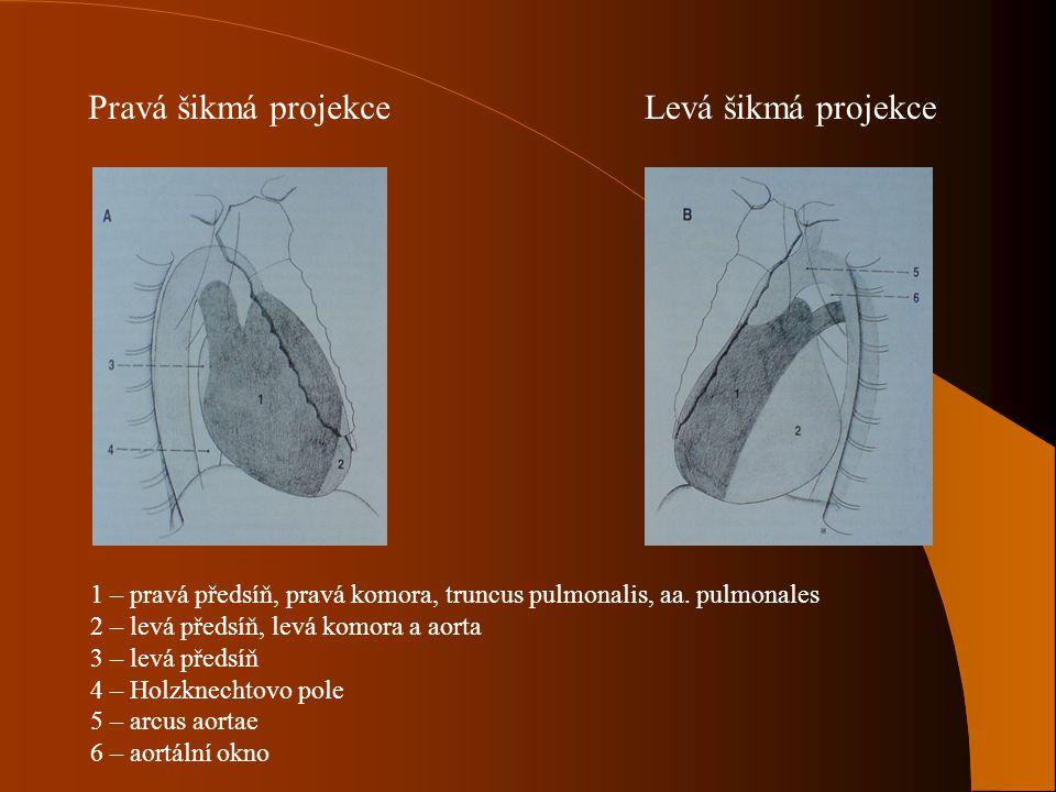 Pravá šikmá projekceLevá šikmá projekce 1 – pravá předsíň, pravá komora, truncus pulmonalis, aa. pulmonales 2 – levá předsíň, levá komora a aorta 3 –