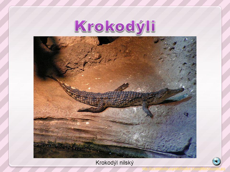 http://cs.wikipedia.org/wiki/Soubor:YoungNileCrocodile.jpg Krokodýl nilský