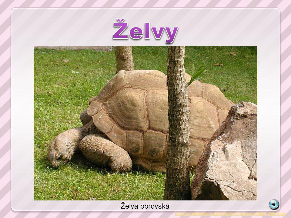 http://cs.wikipedia.org/wiki/Soubor:Tortoise.aldabra.750pix.jpg Želva obrovská