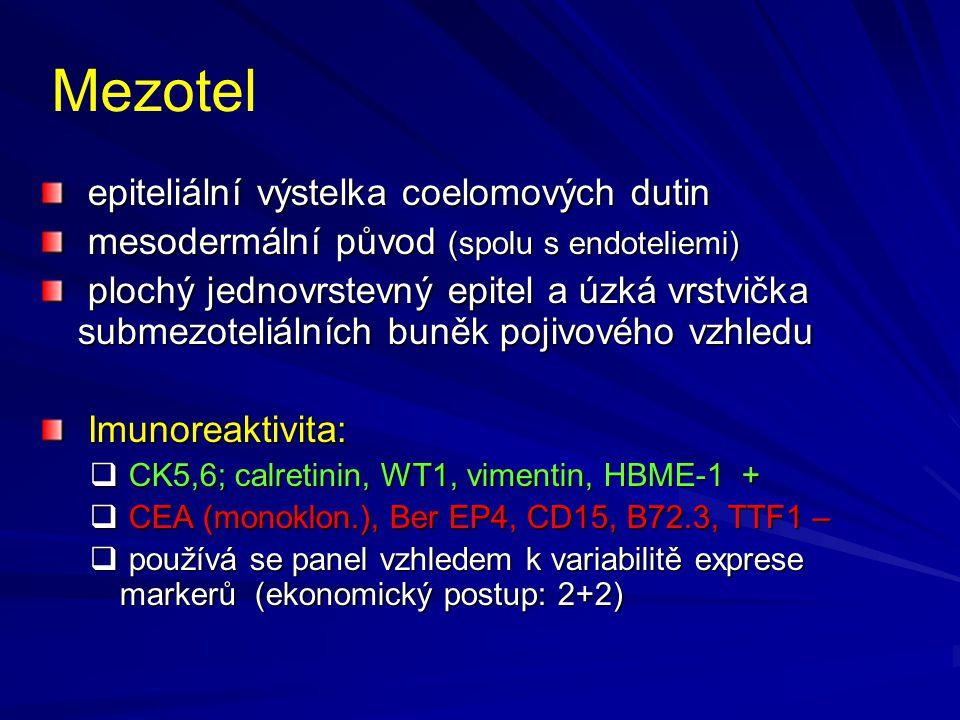Mezotel epiteliální výstelka coelomových dutin epiteliální výstelka coelomových dutin mesodermální původ (spolu s endoteliemi) mesodermální původ (spo