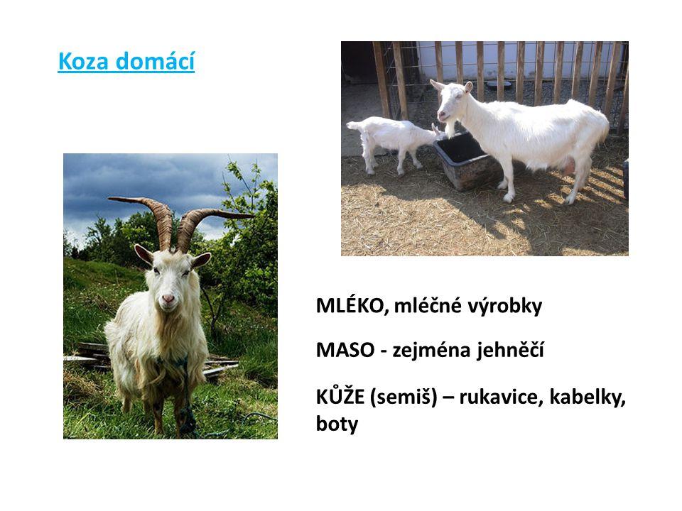 Koza domácí MLÉKO, mléčné výrobky MASO - zejména jehněčí KŮŽE (semiš) – rukavice, kabelky, boty