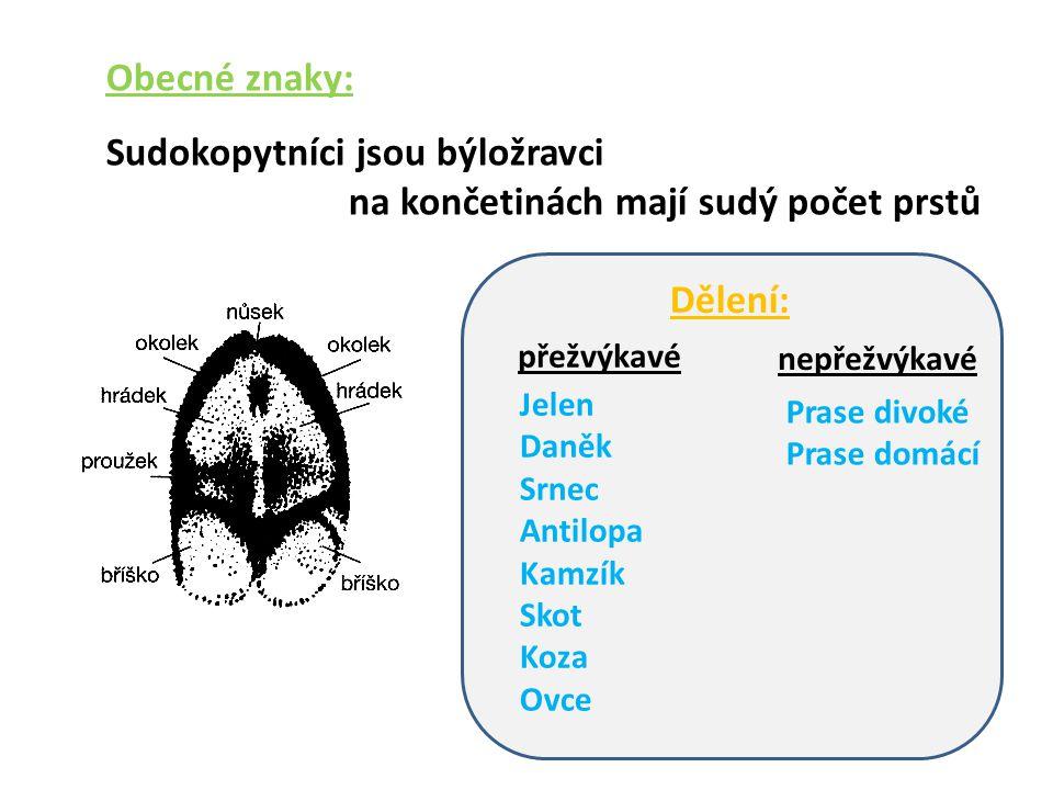 Použitý materiál: Stopa http://ldf.mendelu.cz/myslivost/mammalia/artiodactyla/stopa.pnghttp://ldf.mendelu.cz/myslivost/mammalia/artiodactyla/stopa.png Prase divoké popis http://files.zvireci-forum.webnode.cz/200000019-9d6db9e683/prase%20divoke.jpghttp://files.zvireci-forum.webnode.cz/200000019-9d6db9e683/prase%20divoke.jpg Bachyně se selátky http://files.petrkosan.webnode.cz/200000024-90bc39101d/01a1862794_9270459_o2.jpghttp://files.petrkosan.webnode.cz/200000024-90bc39101d/01a1862794_9270459_o2.jpg Prase domácí http://leccos.com/pics/pic/prase_domaci-_bile_uslechtile_prase.jpghttp://leccos.com/pics/pic/prase_domaci-_bile_uslechtile_prase.jpg Sele http://masek.fotostranky.net/zvirata/albums/zvirata/domaci_zvirata/04_16166_prase_sele.jpghttp://masek.fotostranky.net/zvirata/albums/zvirata/domaci_zvirata/04_16166_prase_sele.jpg Žaludek kreslený http://img.blesk.cz/static/old_abc/imgdb/original/phpm2OIYa.jpghttp://img.blesk.cz/static/old_abc/imgdb/original/phpm2OIYa.jpg Rohy http://www.drakkaria.cz/images_items/frtan---roh_2.jpghttp://www.drakkaria.cz/images_items/frtan---roh_2.jpg Parohy http://img.aktuality.sk/stories/NAJNOVSIE_FOTKY/ILUSTRACNE/VEDA/osteoporoza_parohy_12_irec.jpghttp://img.aktuality.sk/stories/NAJNOVSIE_FOTKY/ILUSTRACNE/VEDA/osteoporoza_parohy_12_irec.jpg Parohy růst http://upload.wikimedia.org/wikipedia/commons/thumb/8/82/Kronhjortshornets_utveckling,_Nordisk_familjebok.svg/ 220px-Kronhjortshornets_utveckling,_Nordisk_familjebok.svg.png http://upload.wikimedia.org/wikipedia/commons/thumb/8/82/Kronhjortshornets_utveckling,_Nordisk_familjebok.svg/ 220px-Kronhjortshornets_utveckling,_Nordisk_familjebok.svg.png Jelen http://nd04.jxs.cz/519/266/61e3c96eeb_68538386_o2.jpghttp://nd04.jxs.cz/519/266/61e3c96eeb_68538386_o2.jpg Daněk http://www.fotoaparat.cz/images/0285/028594.jpghttp://www.fotoaparat.cz/images/0285/028594.jpg Srnec http://www.naturfoto.cz/fotografie/ostatni/srnec-obecny-5511.jpghttp://www.naturfoto.cz/fotografie/ostatni/srnec-obecny-5511.jpg 