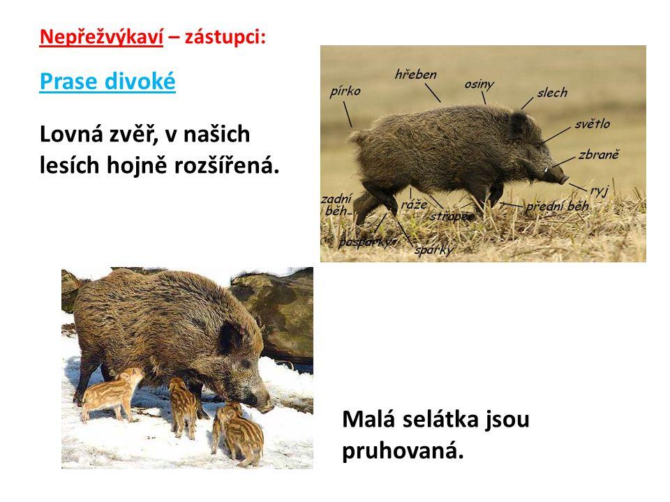 Prase domácí Užitek: a)maso b) kůže (krupon)