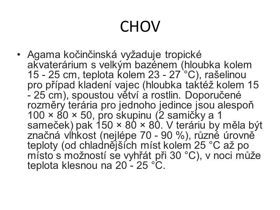CHOV Agama kočinčinská vyžaduje tropické akvaterárium s velkým bazénem (hloubka kolem 15 - 25 cm, teplota kolem 23 - 27 °C), rašelinou pro případ klad