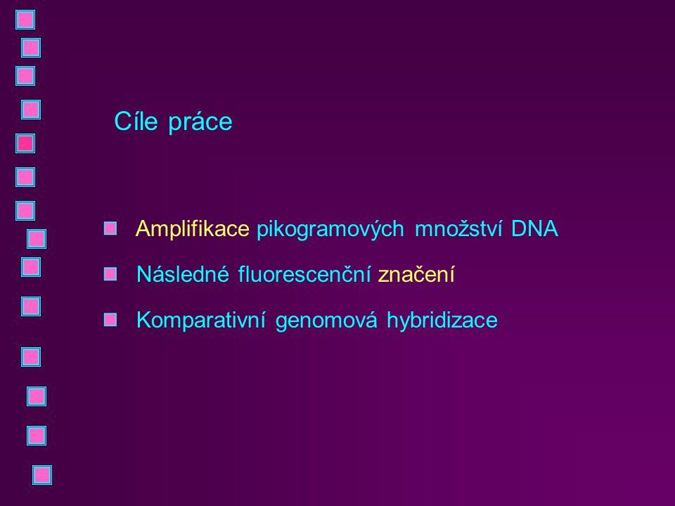 Cíle práce Amplifikace pikogramových množství DNA Následné fluorescenční značení Komparativní genomová hybridizace