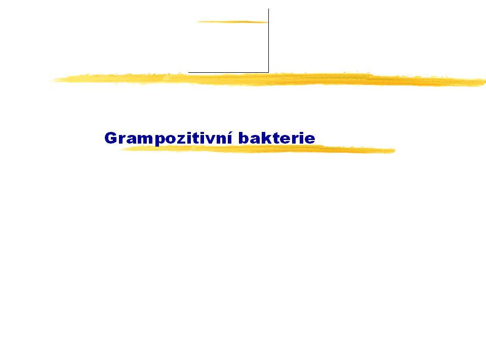 Nepravidelné nesporulující G+ tyčinky zRody: zCorynebacterium yC.renale, C.cystitidis, C.pilosum, C.kutscheri y(C.mastitidis, C.camporealensis) zArcanobacterium (A.