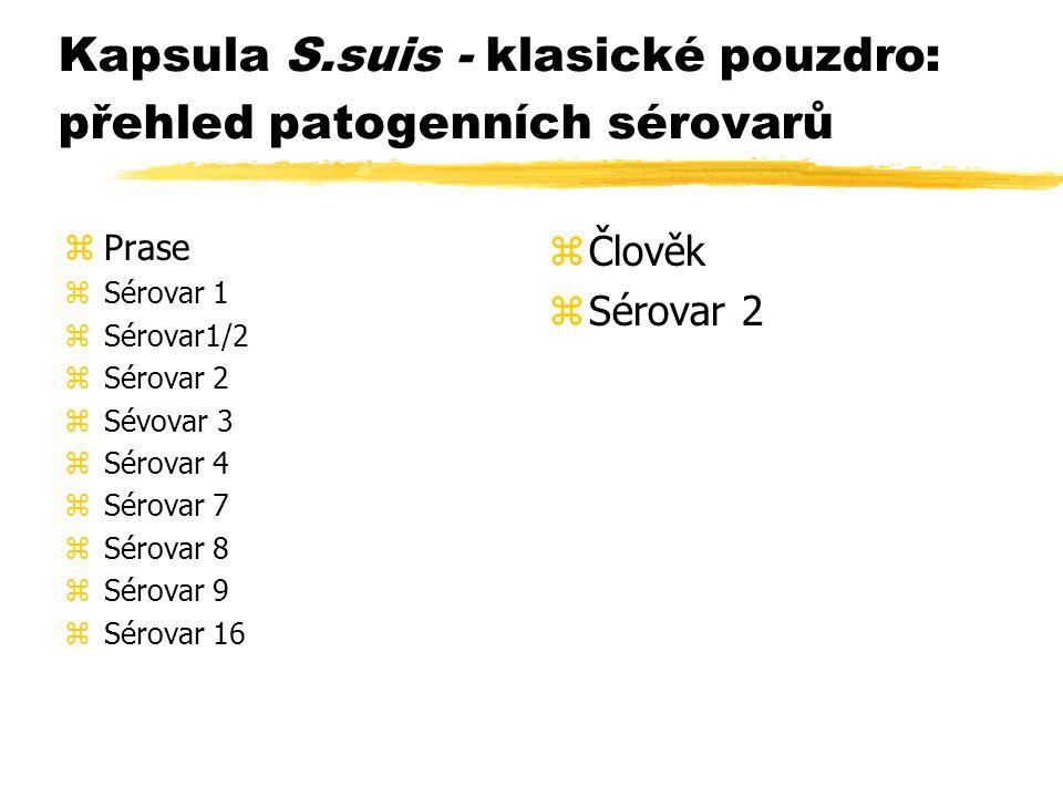 Kapsula S.suis - klasické pouzdro: přehled patogenních sérovarů zPrase zSérovar 1 zSérovar1/2 zSérovar 2 zSévovar 3 zSérovar 4 zSérovar 7 zSérovar 8 z