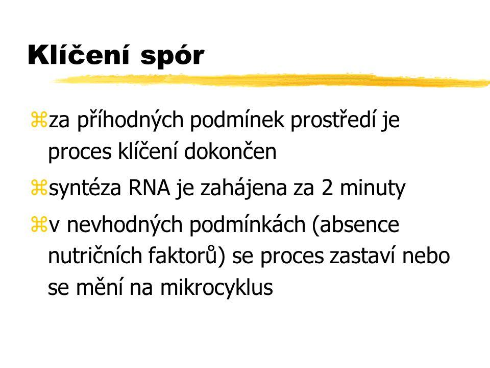 Klíčení spór zza příhodných podmínek prostředí je proces klíčení dokončen zsyntéza RNA je zahájena za 2 minuty zv nevhodných podmínkách (absence nutri