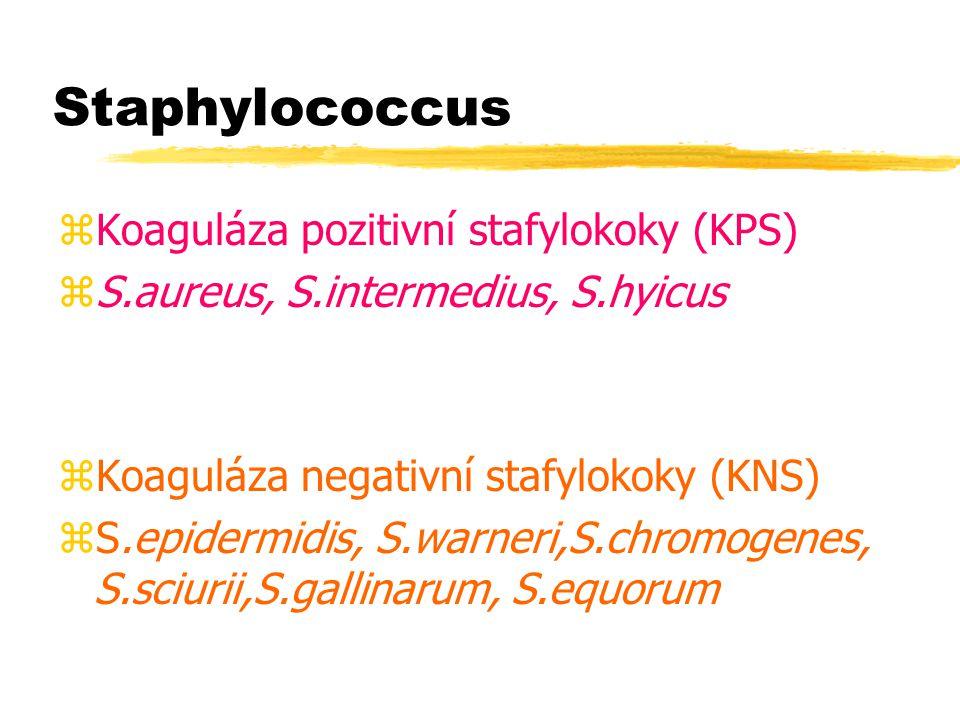 Staphylococcus zKoaguláza pozitivní stafylokoky (KPS) zS.aureus, S.intermedius, S.hyicus zKoaguláza negativní stafylokoky (KNS) zS.epidermidis, S.warn